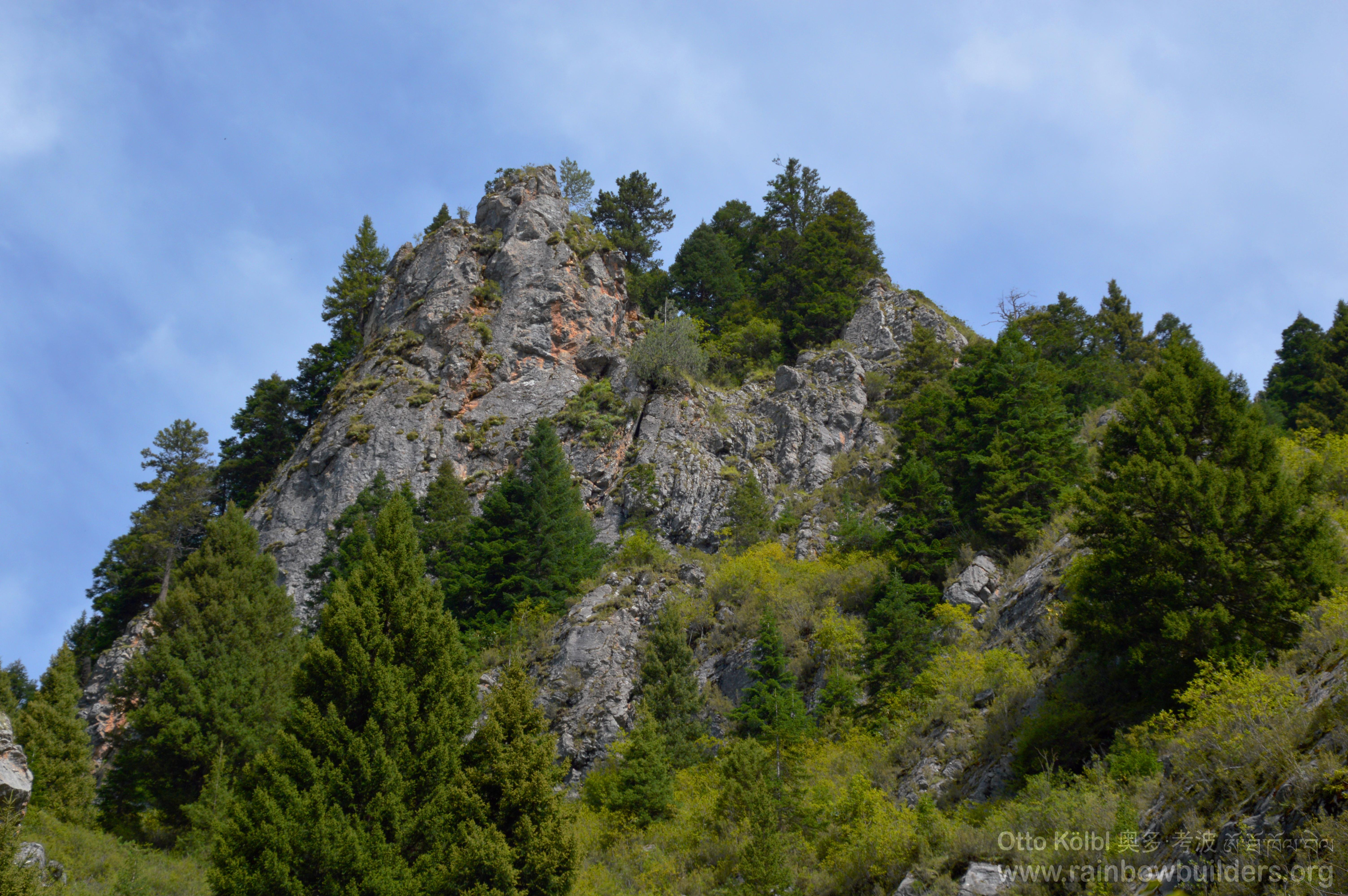 mountains pine trees - photo #8